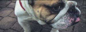 dog seizure treatment home remedy