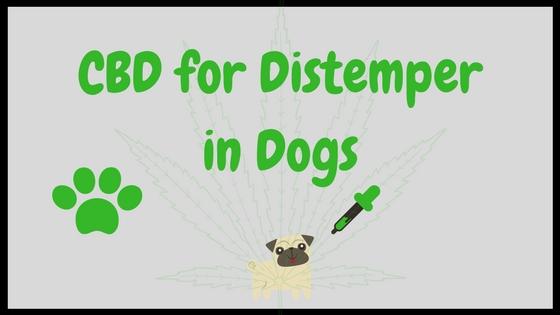 CBD for Distemper in Dogs
