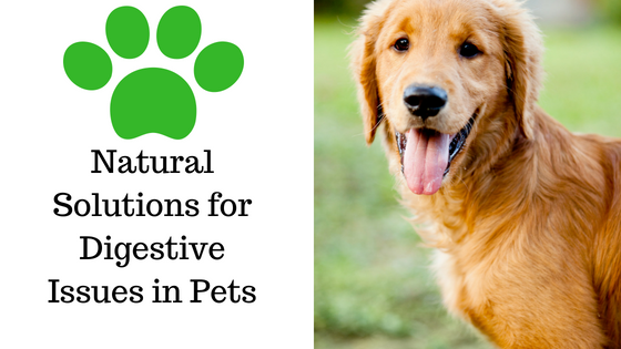 Natural Solutions for Digestive Issues in Pets