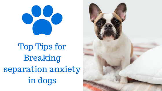Top Tips for Breaking Separation Anxiety in Dogs