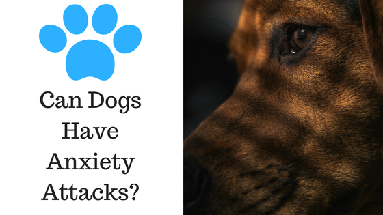 Can Dogs Have Anxiety Attacks?