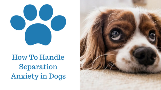 How To handle separation anxiety in dogs