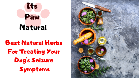 Best Natural Herbs For Treating Your Dog's Seizure Symptoms - It's