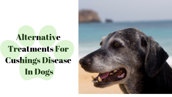 Alternative Treatments For Cushings Disease In Dogs - It's Paw Natural
