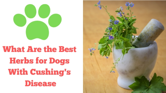 What Are the Best Herbs for Dogs With Cushing's Disease? - It's Paw