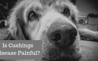 Is Cushing's Disease Painful For Dogs?