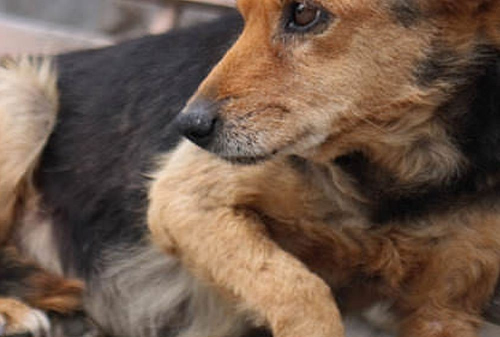 Best Diet for Dogs with Early Stage Cushing's Disease